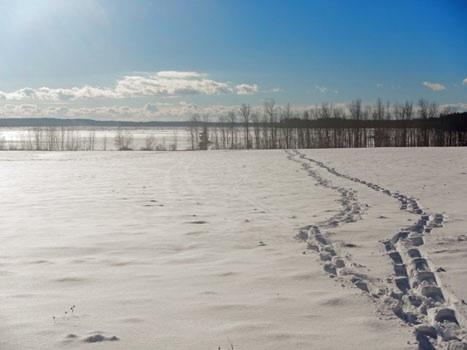 Bowdoinham WMA snowshoeing