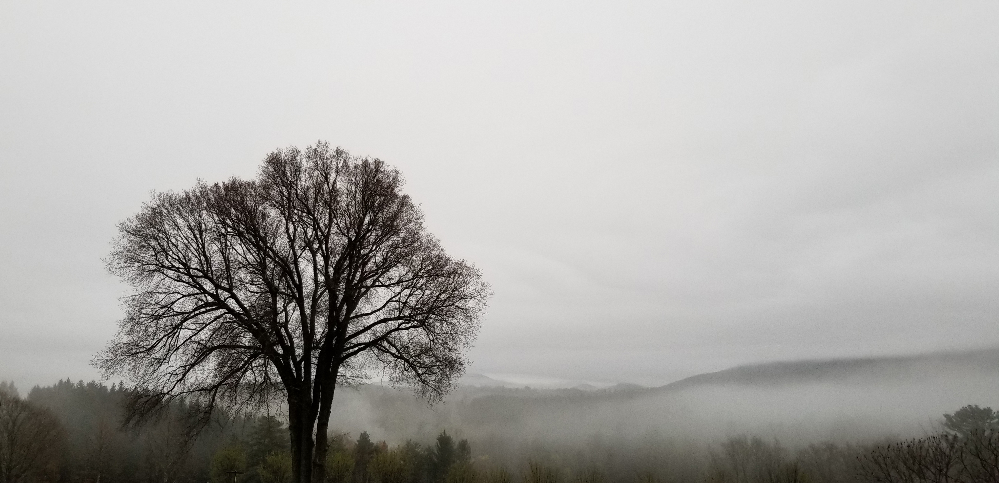 Tree with fog on mountains