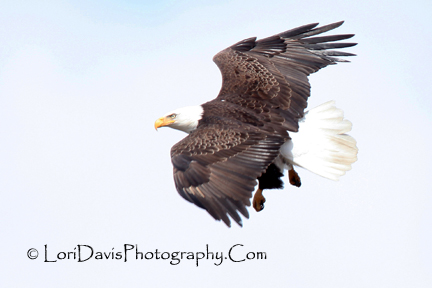 flying_eagle_compact